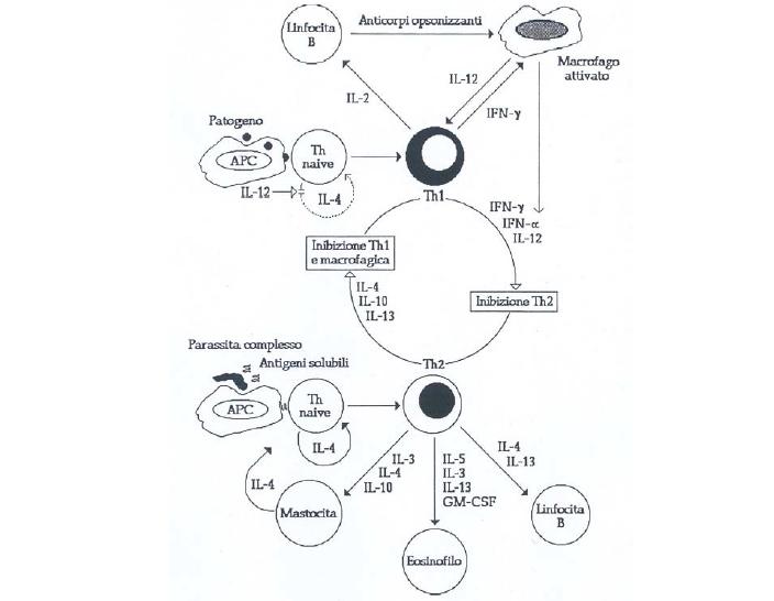 grafico risposta immunitaria ai virus influenzali