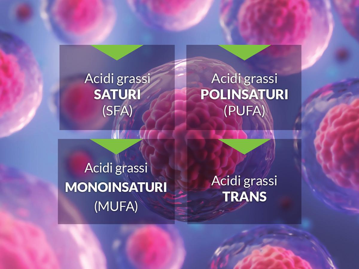elenco acidi grassi lipidomica